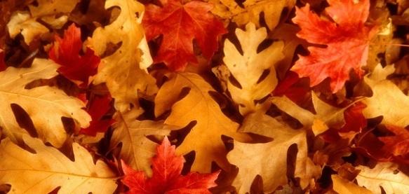 fond_ecran_automne_060